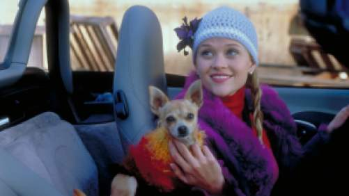 Reese Witherspoon in Legally Blonde driving in the car with a dog