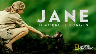 Jane Goodall reaching out to a baby chimpanzee